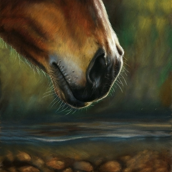 Horse drinking river - illustration - kate_vigdis | ello