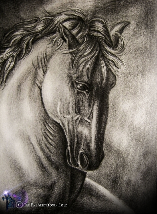 horse anatomy study - drawing, design - yonanfineart | ello