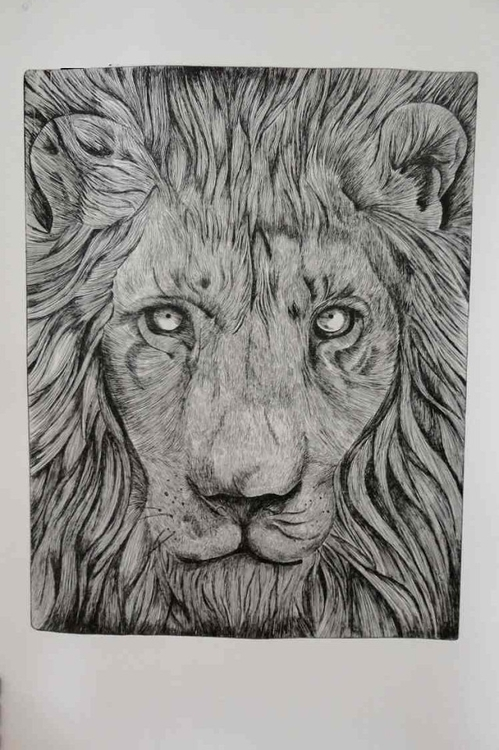 Lion - etching - illustration, lion - mleczu | ello