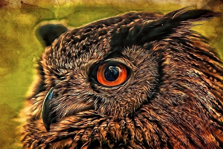 owl - photography, digitalart, photomanipulation - pierocefaloni | ello