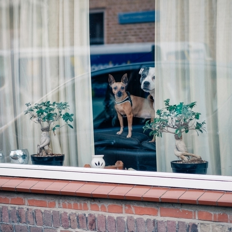 Snapshot - animals, color, dog, dogs - klaasphoto | ello
