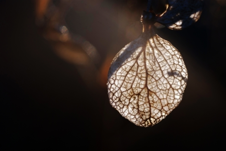 bleed - leaf, veins, sunrise, light - rajabeta | ello