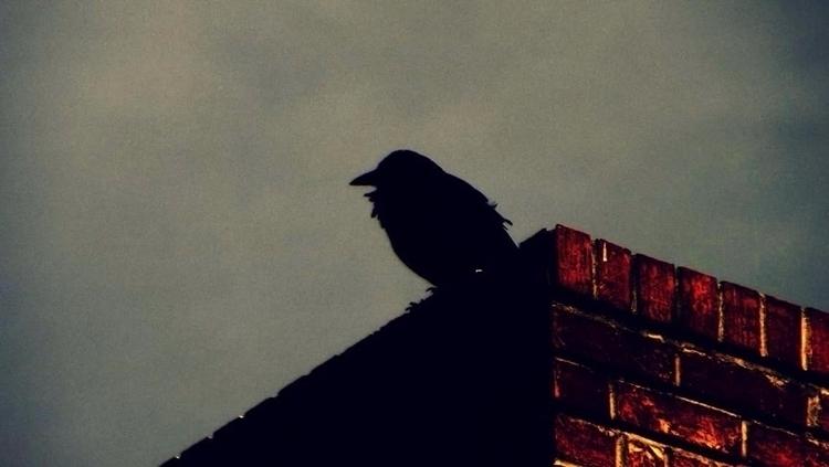 crow - katroselamb   ello
