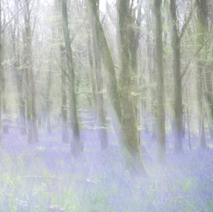 bluebell woods house - joannunaki | ello