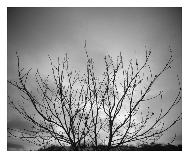 tees, brunches, sky, clouds - alexander_stiv | ello