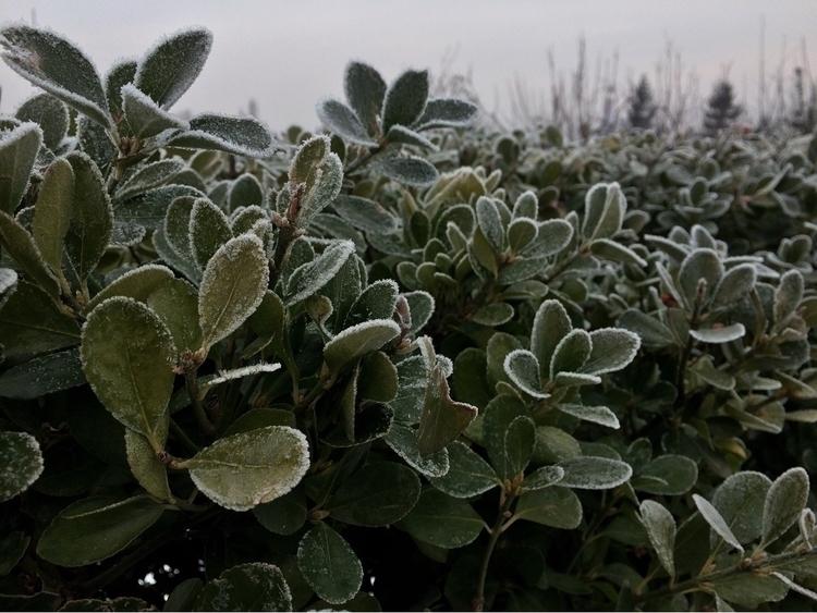winter, green, nature, frost - alexander_stiv | ello