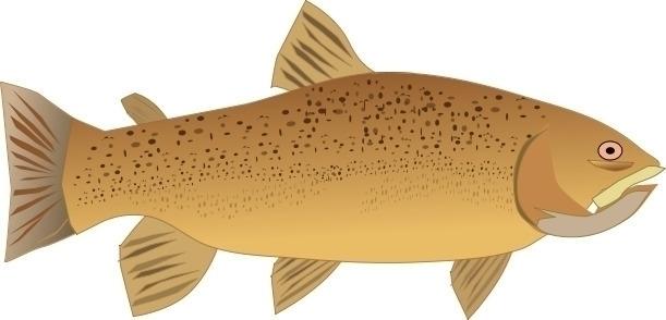 ello - fish, art, trout, VectorDrawing - coochdawg | ello