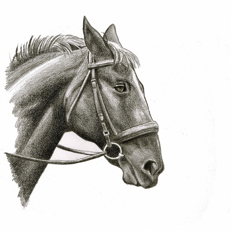 Horse sketch. graphite. Year 35 - mydiagonallife | ello
