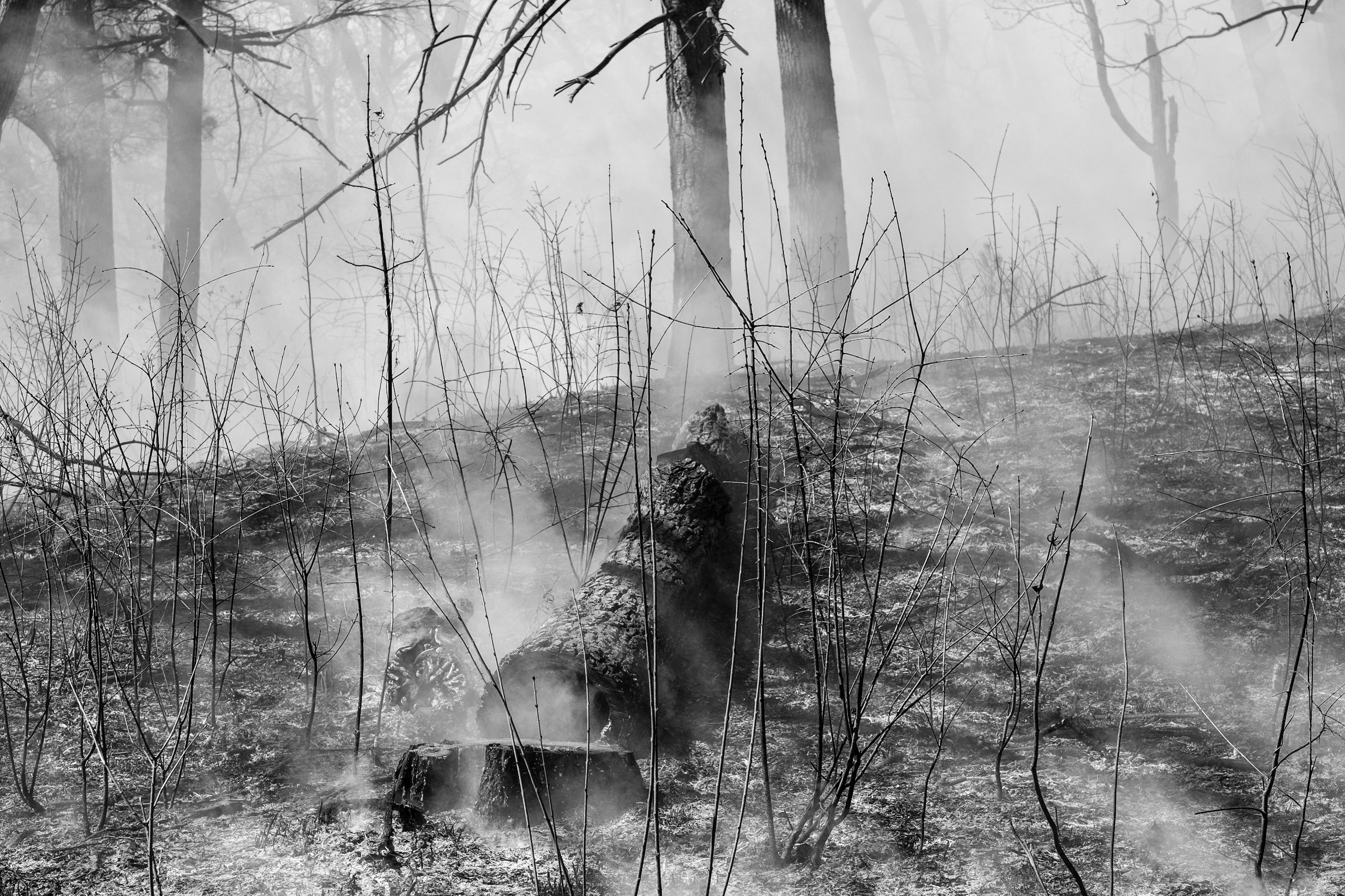 Smoky Remains =========== Fujif - benroffelsen | ello