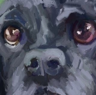 Closeup eyes - workingprogress, dog - dogmaportraits | ello