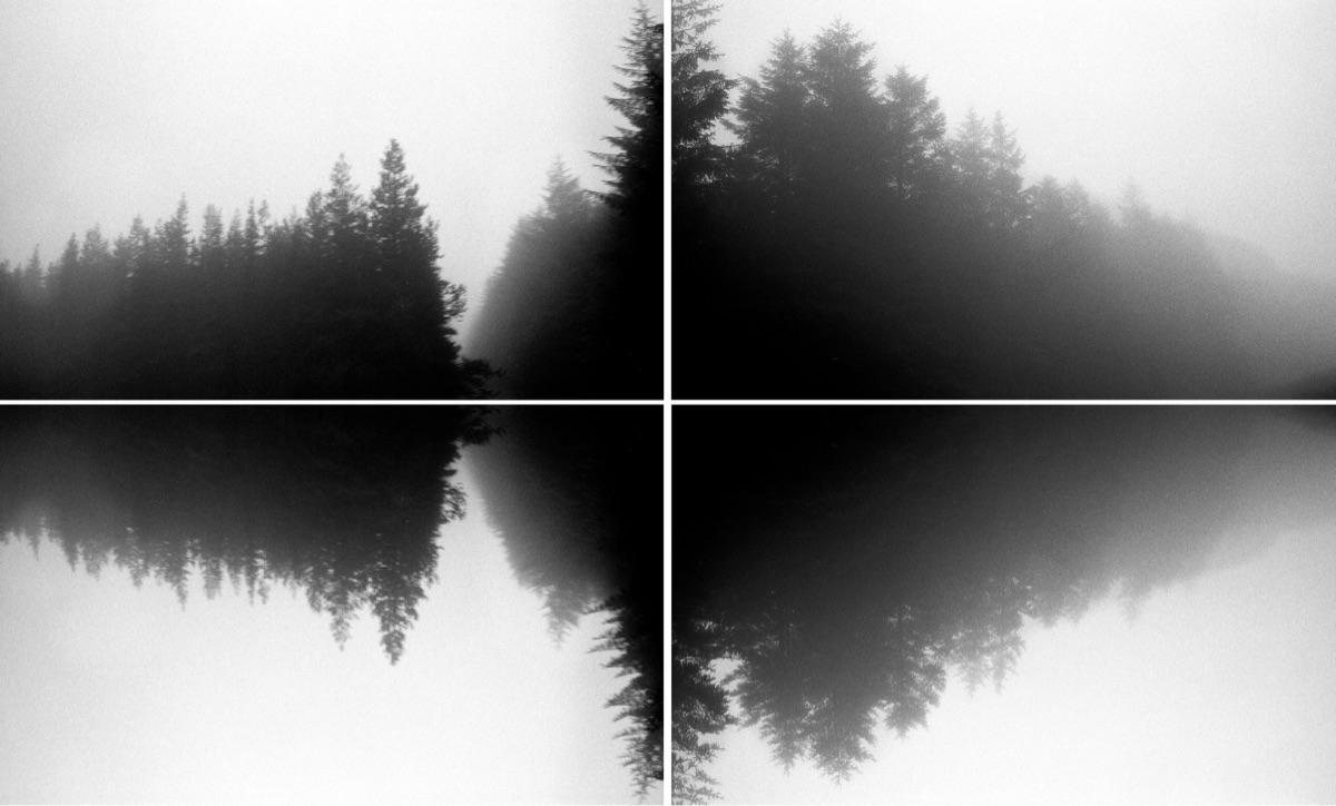 Pine Waves - leica, photography - jmo | ello