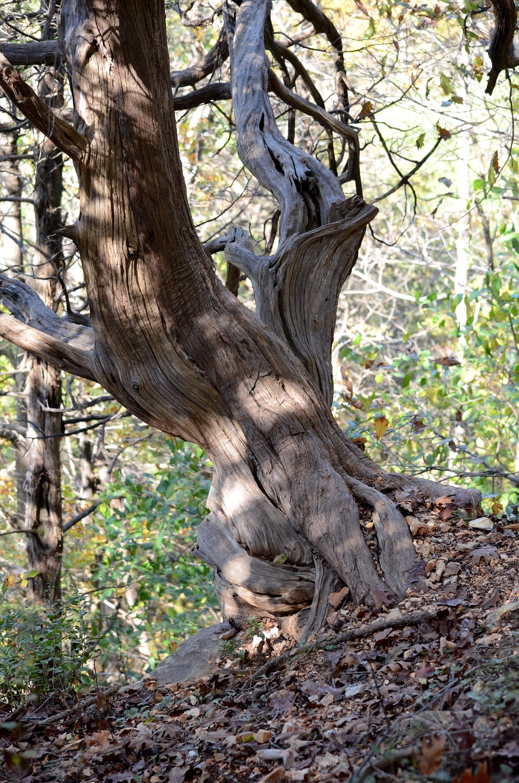 guy perched bluff top hiking ~~ - moosedixon | ello