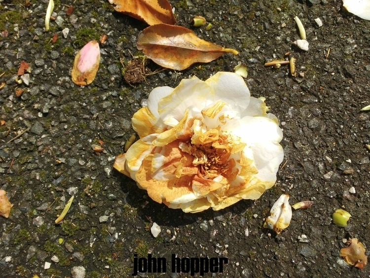 LOOP day drips night, nearest.  - johnhopper | ello