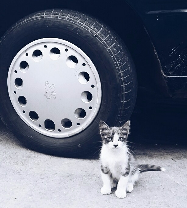 cat - aleksaleksa | ello