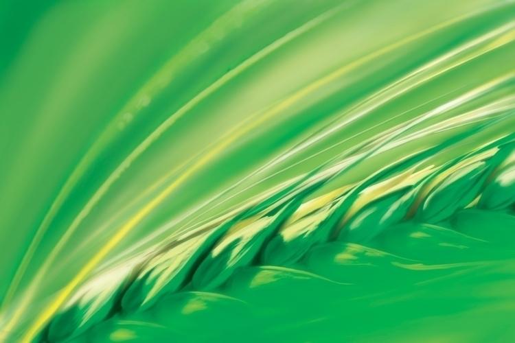 Barley - barley, vodka, poster, oilpaint - stevevdh | ello