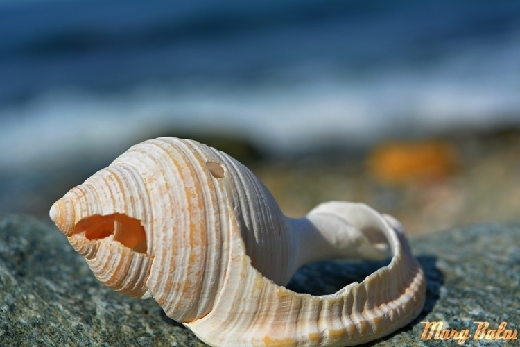treasure - nature, photography, shell - mairoularissa | ello