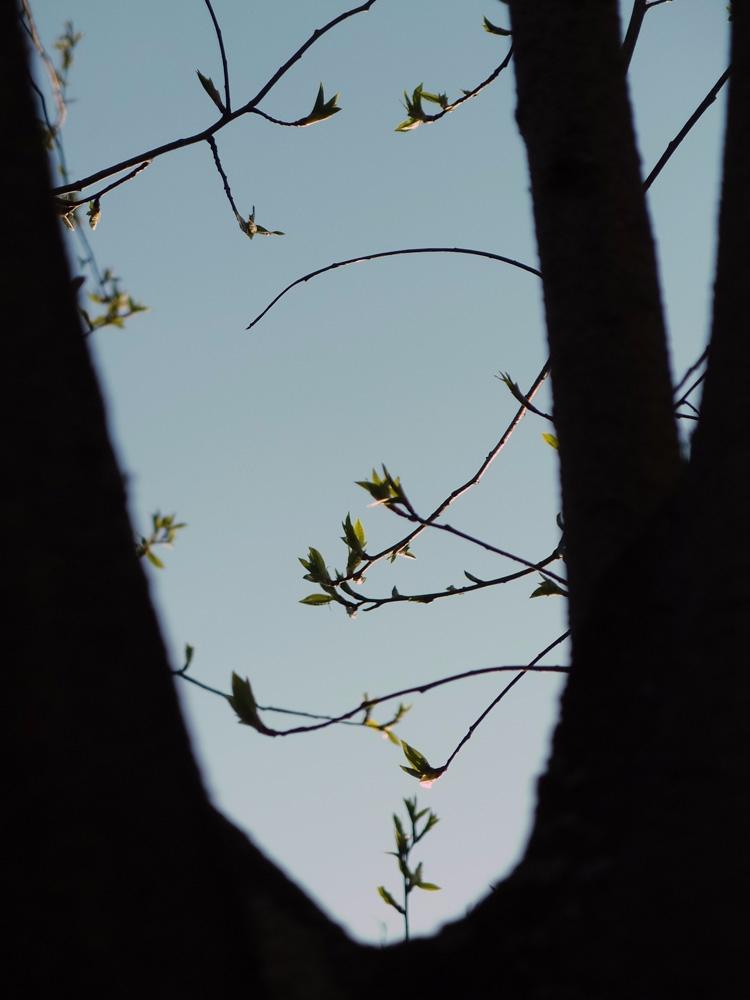 Parabola Flickr / Tumblr Instag - andreigrigorev | ello