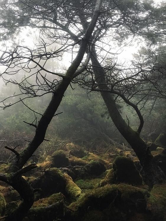 damp mossy goings road Glen Bri - julian_calverley | ello