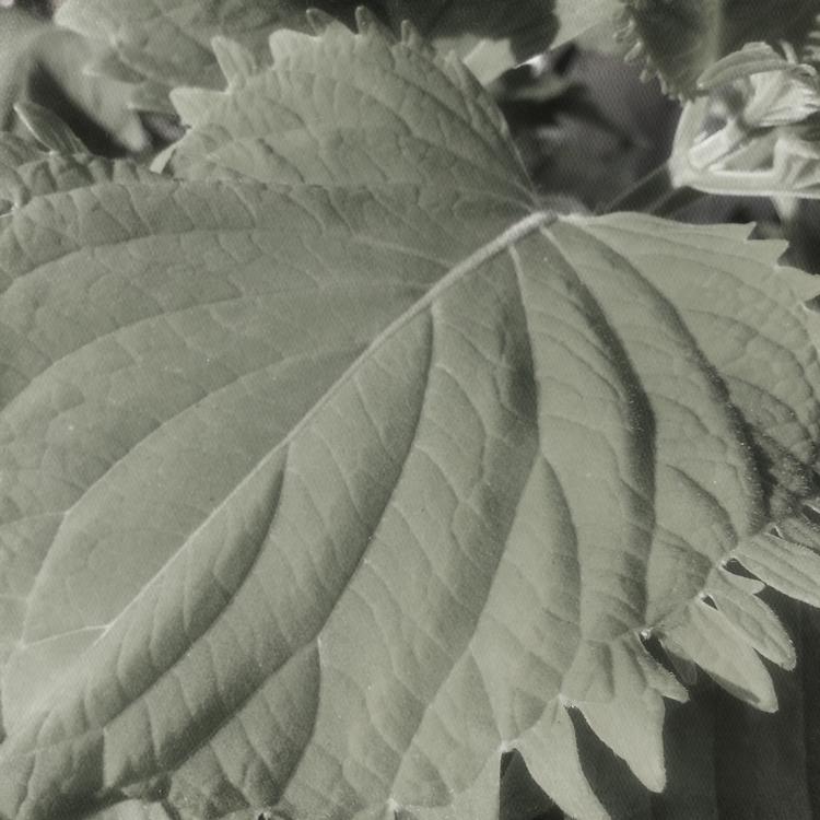 Plant Added Garden: Wasbi Coleu - mikefl99 | ello