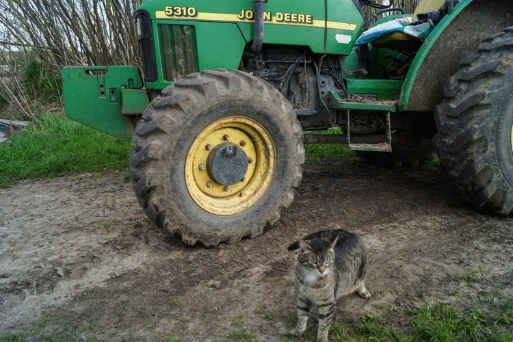 Farm cat - photography, cats, animals - tobecooked | ello
