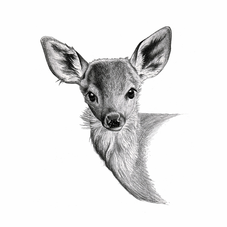 Fawn Drawing. graphite deer fam - mydiagonallife | ello