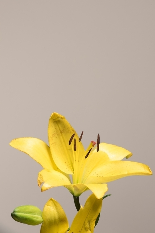 photography, flowers, nikon, nikond810 - batdepat | ello