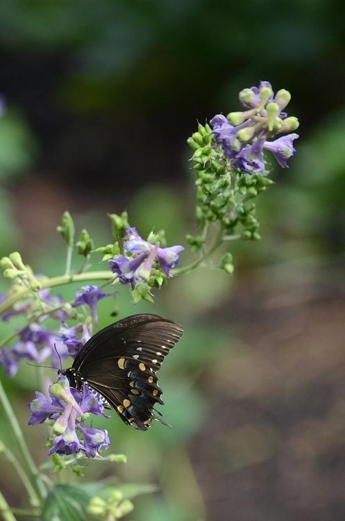 butterfly hide flower [Shaw Nat - moosedixon | ello