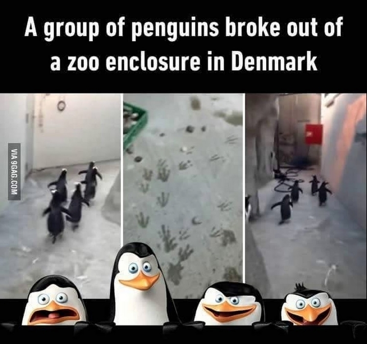 Kowalski! group penguins broke  - esquirephotography | ello