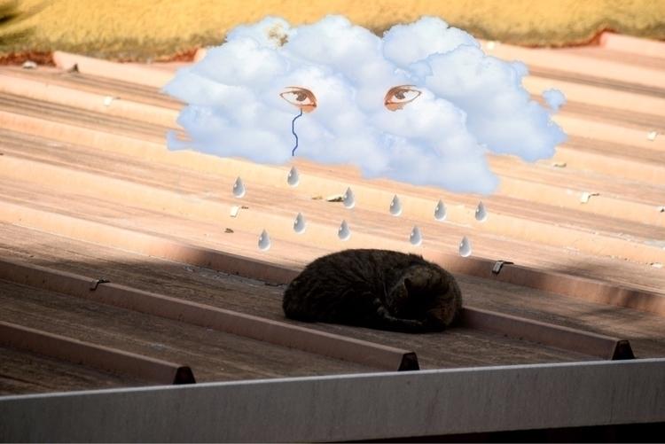 cat, rome, day, 2017, art, photography - mishanich | ello