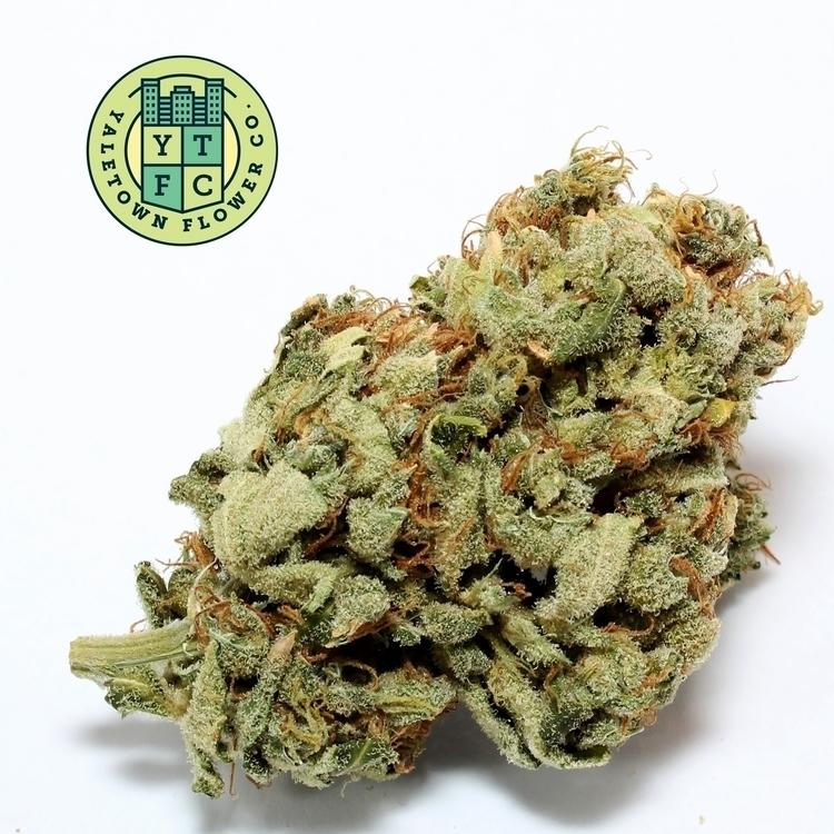 Yaletown Flower Co. bring Super - greenz | ello