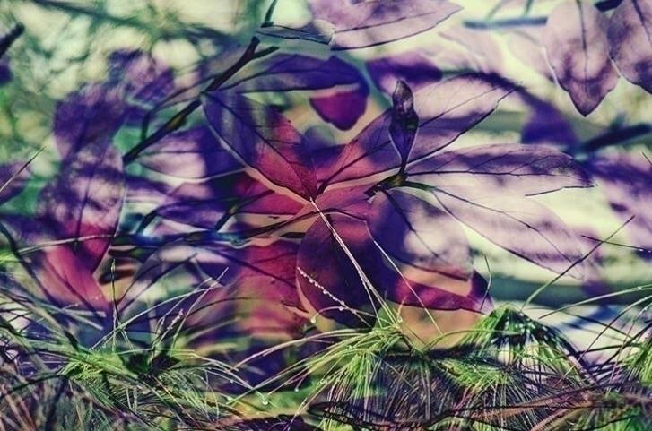 wilderness - girl, trees, plants - mishanich | ello
