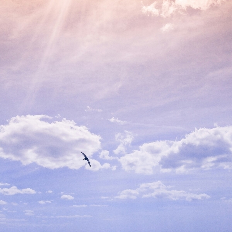 flight - birds, sky, nature, free - passionriot | ello