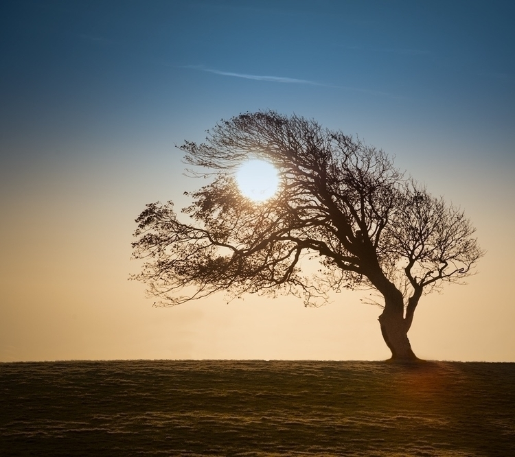 Sun Tree | South Downs UK - photography - frank-zschieschang | ello