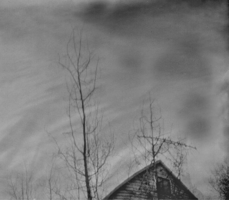 Tree tops storm Pinhole camera  - katznjamn31545 | ello