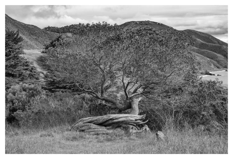 Tree. Point Bonita, CA - guillermoalvarez | ello