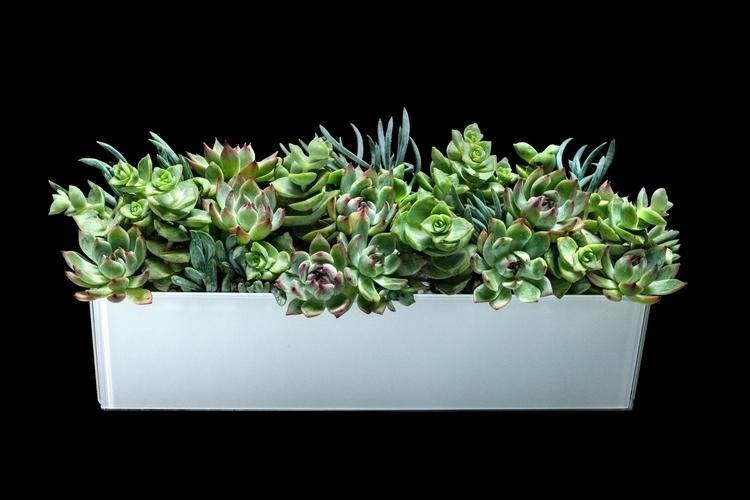 airplants, ello, botanicaldesign - priscilla_murray   ello
