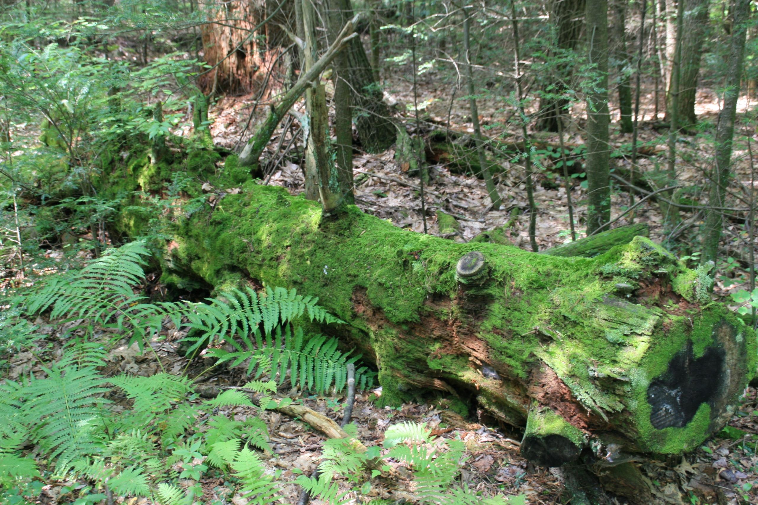 rolling stone collects moss, fe - segloch | ello