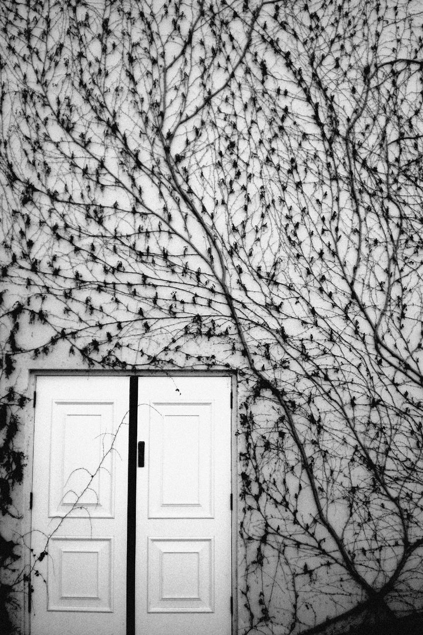 Mitch Cullin - ellophotography, ellophotographer - mitchcullin   ello