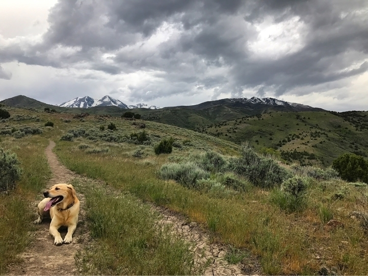 dog, mountains, trailrunning - genevievejoyj | ello