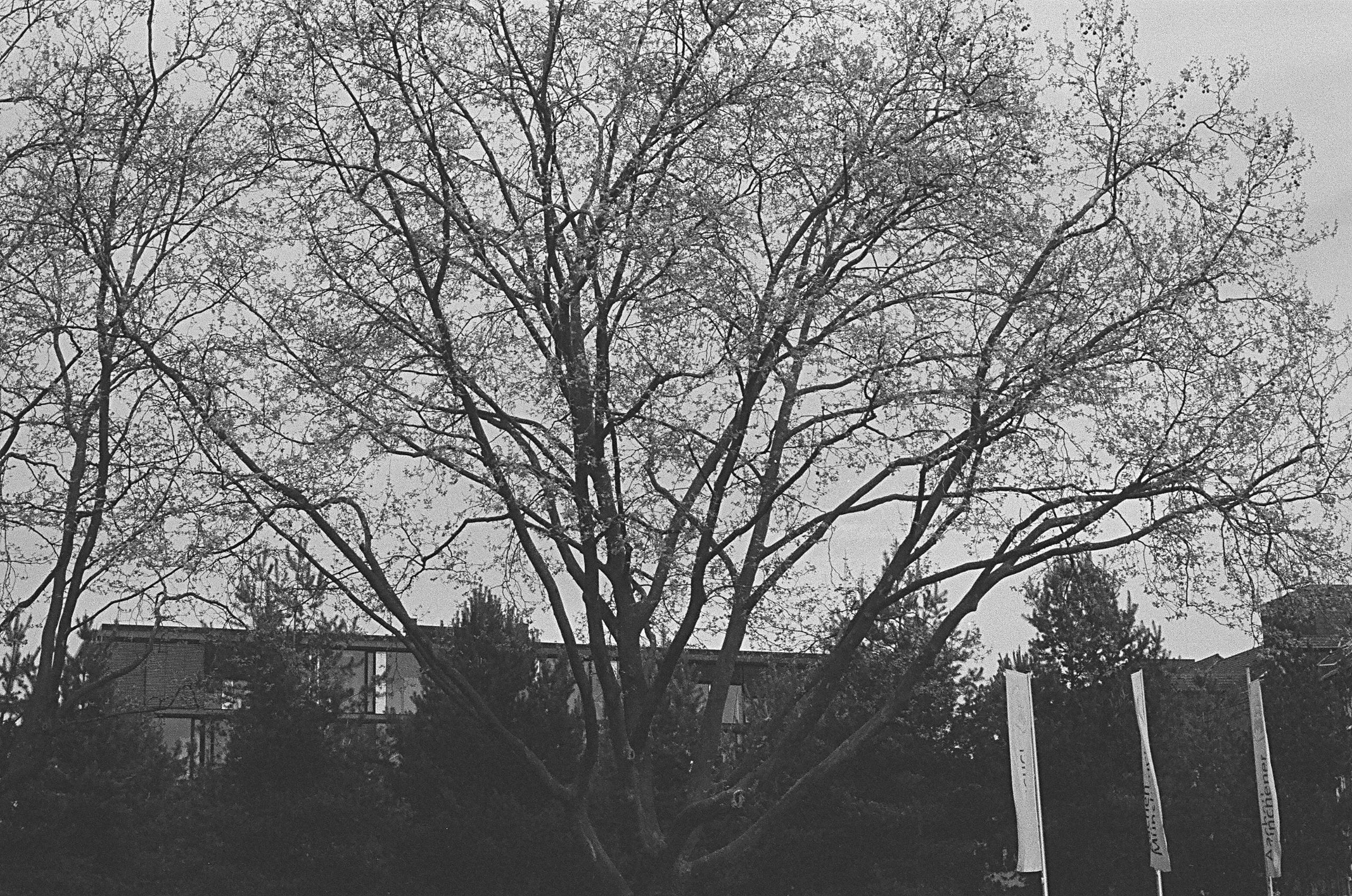 Bäume und Himmel Franzstraße, A - walter_ac   ello
