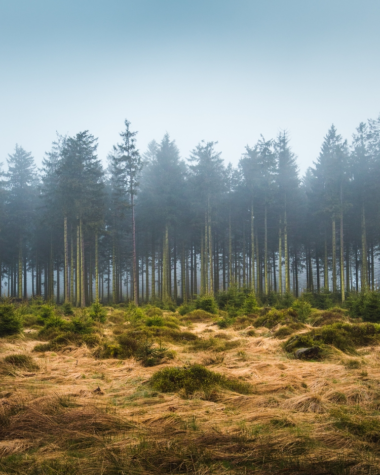 Watching fog roll - nature, landscape - charlespacque | ello