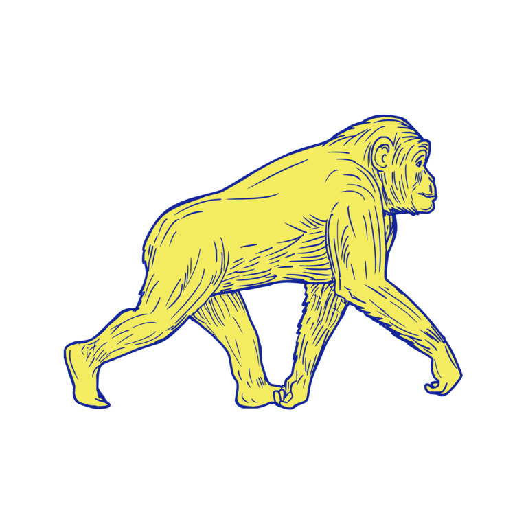 Chimpanzee, Walking, Side, Drawing - patrimonio | ello