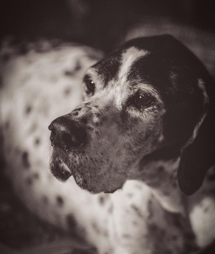 friend - oldfriend, dog, dogs, pointer - natxodiego | ello