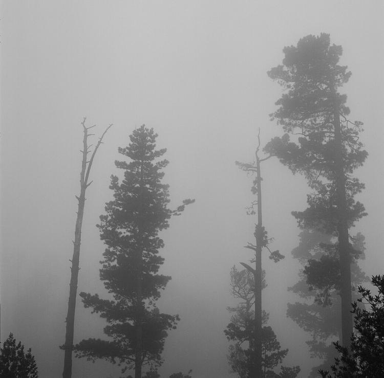 love fog - berkeleyhills, hasselblad - teetonka | ello