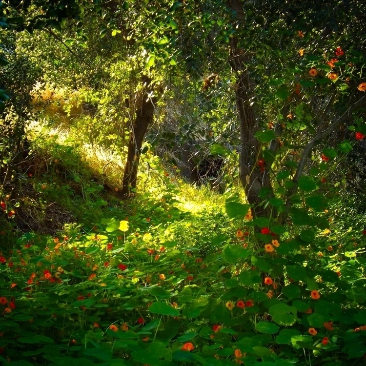 beauty nature finds spread. hop - alexgzarate | ello