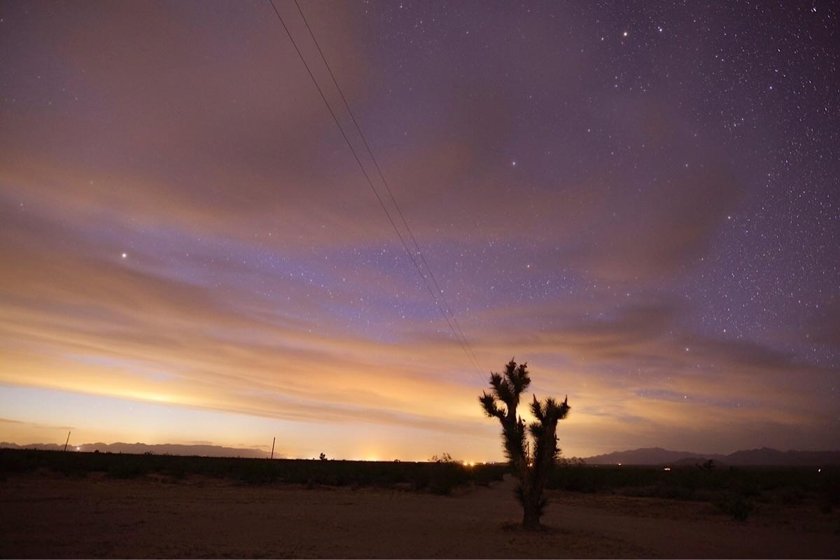 Lone Joshua Tree  - night_photography - bamps | ello