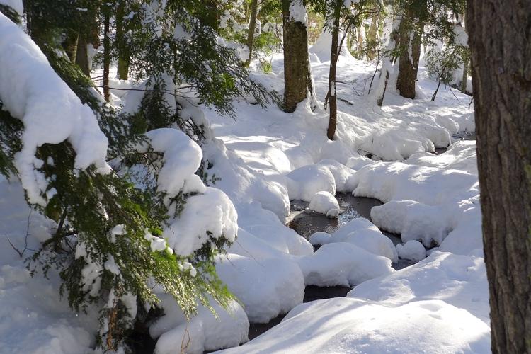 Winter 40 - dalespiry | ello