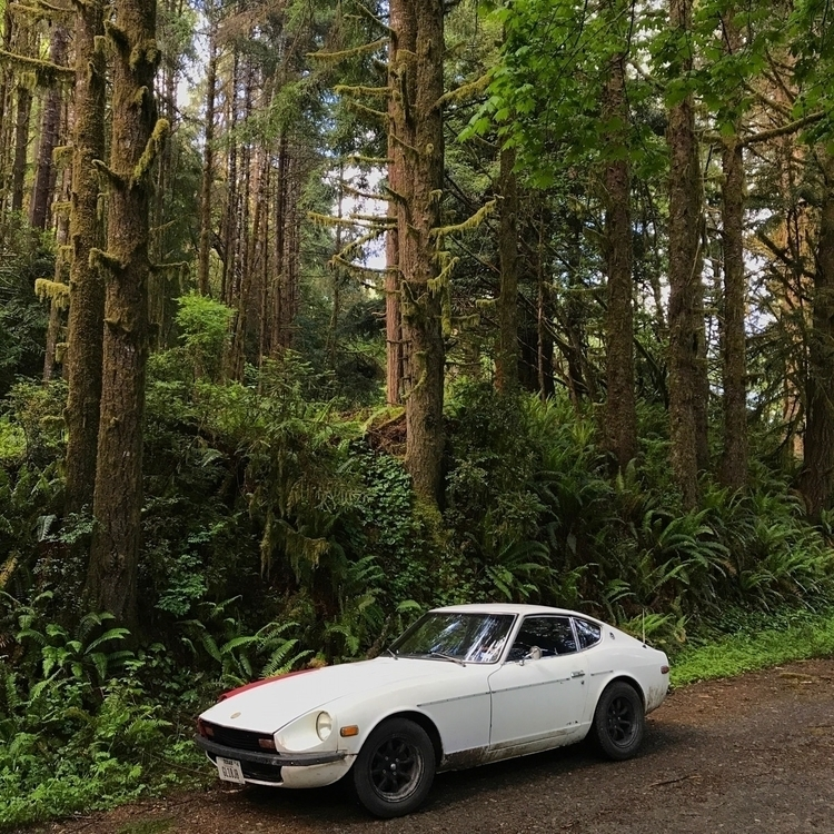 Redwood cruising - icarusframes | ello