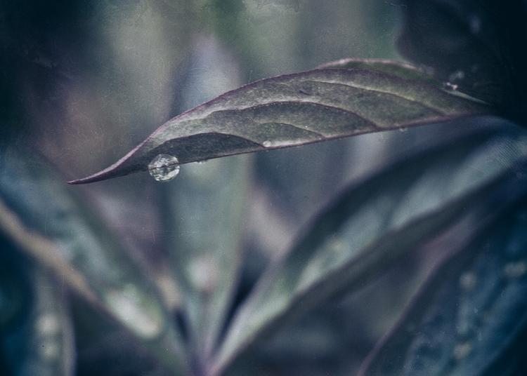 rain - nature, natureart, garden - peter_skoglund | ello