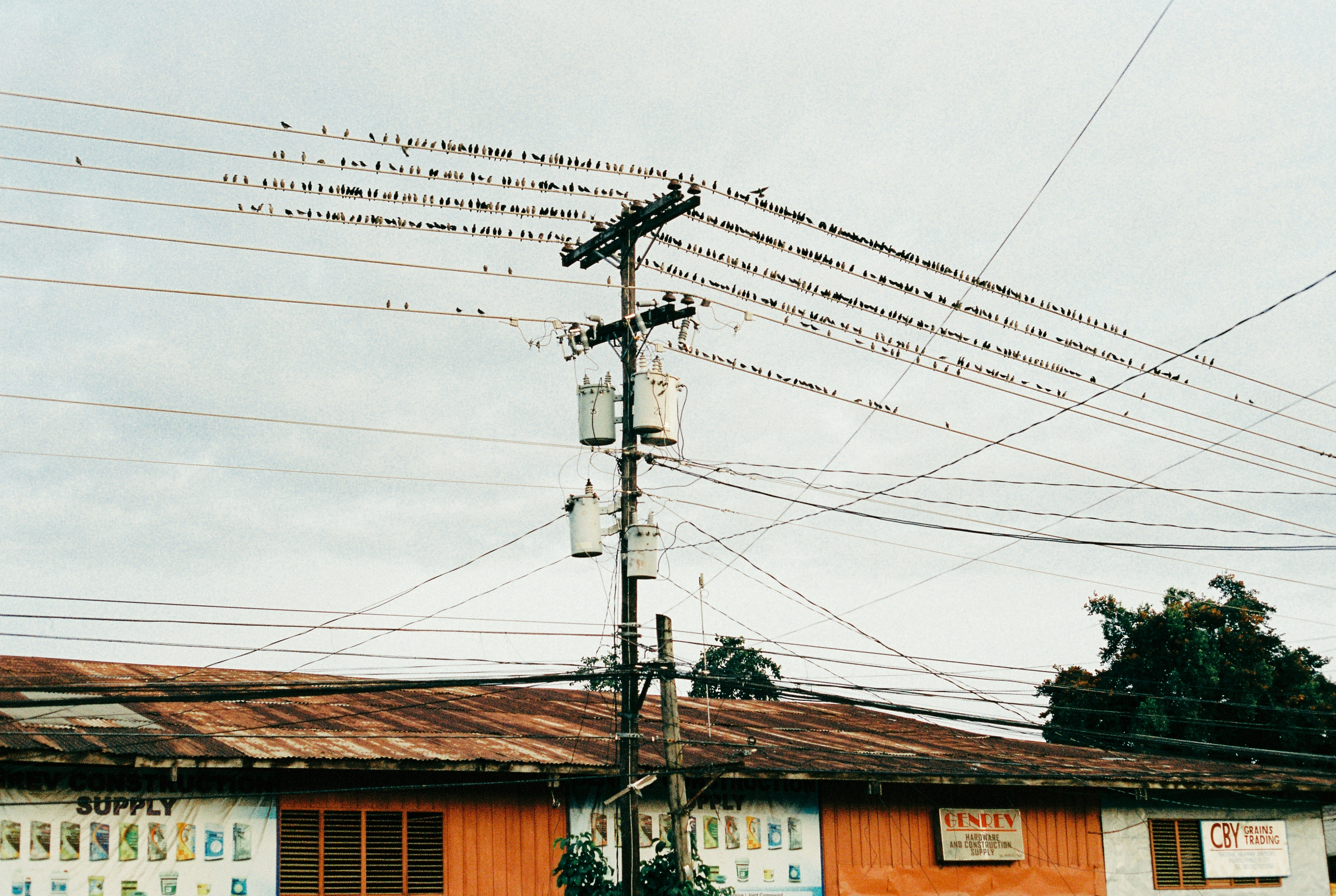 birds hablofilipino photography - mrjose | ello